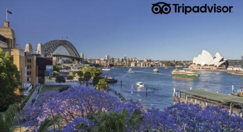 Vibrierende Jacarandabäume blühen im Frühjahr an Circular Quay , Sydney