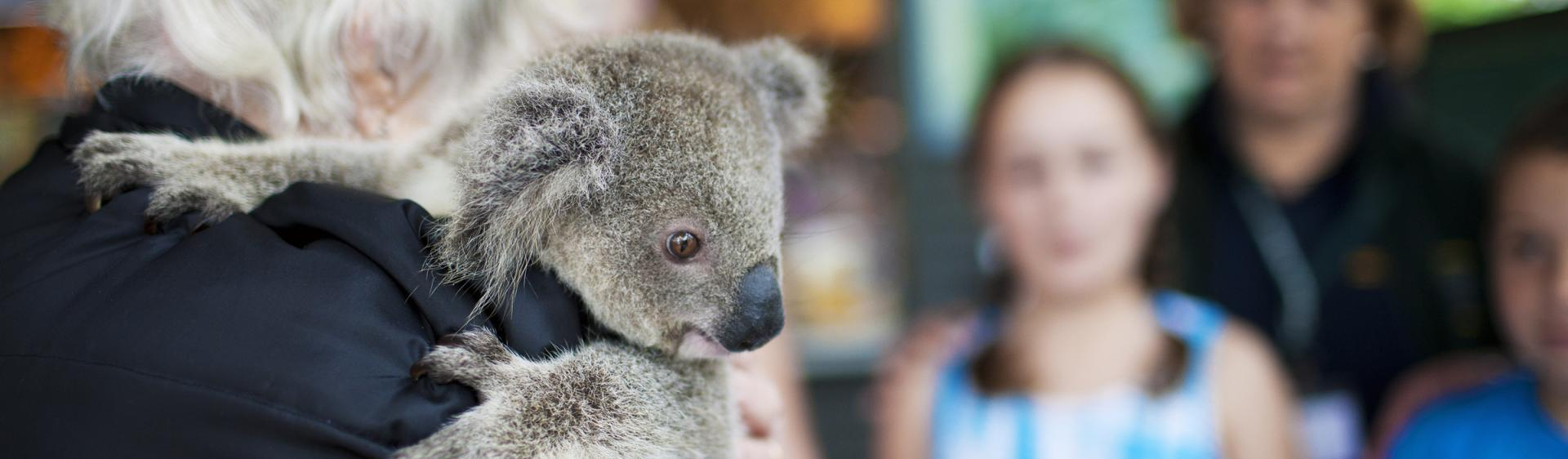 Port Macquarie Koala Hospital