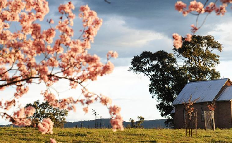 Blütenpracht in der Region Mudgee, Ländliches NSW NSW
