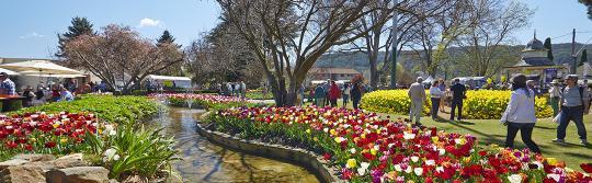 Tulip Time, Bowral