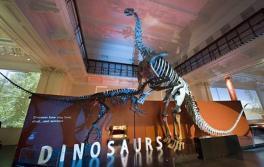 Dinosaurier, Australian Museum